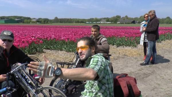 Налево — море желтых тюльпанов, направо — море красных тюльпанов.