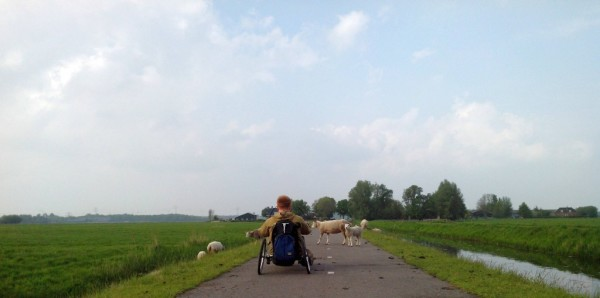 Культурные европейские овцы не мешают хэндбайкерам