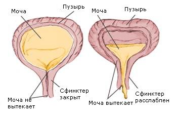 neirogenni