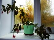 Итоги конкурса «Фото из моего окна»