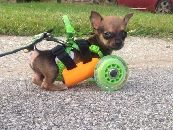unusual-wheelchairs-7