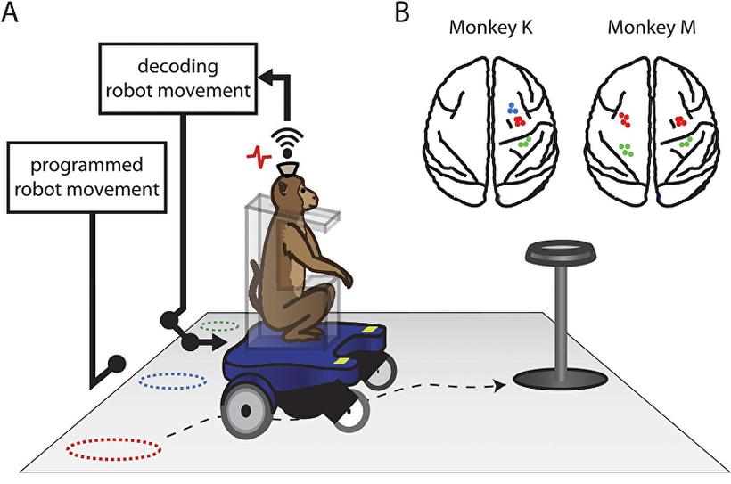 Ученые создали инвалидную коляску, управляемую силой мысли